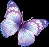 Een vlinder die de website komt bezoeken